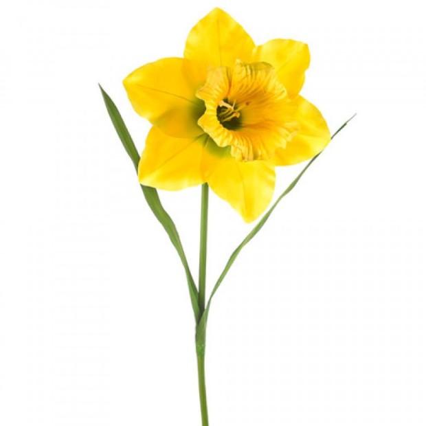 Grande-daffodil-yellow-750x750